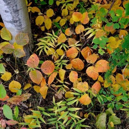 Autumn Ground Cover